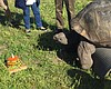 Sam The Galapagos Tortoise Celebrates 53rd Birthday In Encinitas