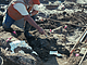 Mastodon Bones Found Near San Diego Freeway Rewrite History Of Humans In North America