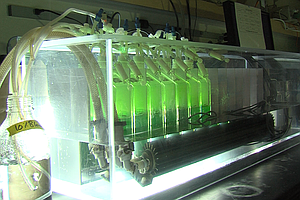 San Diego Company Creates Fatty Algae That Could One Day Help Fight Climate C...