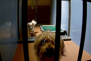 San Diego County Shelters Take In Dozens Of Dogs Over 4th Of July Holiday