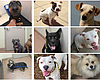 Two Dozen Dogs In San Diego County Remain Unclaimed After July 4th ...