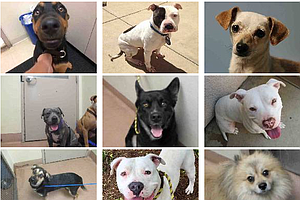 Tease photo for Two Dozen Dogs In San Diego County Remain Unclaimed After July 4th Fireworks