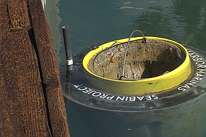 Cleaning Up San Diego Bay's Dirty Marinas