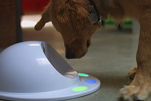 UCSD Students Design 'Game Console For Dogs'