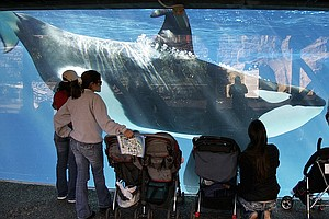 Business Report: SeaWorld Attendance Makes A Comeback