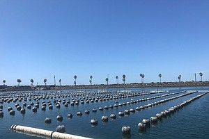 San Diego's Climate Crisis: Oyster Hatchery Challenged By Warming Ocean
