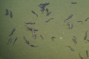 California Scientists Study Climate Change At Bottom Of The Ocean