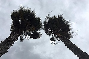 San Diego Getting Strong, Dry Winds From Santa Ana