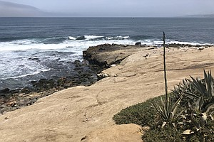 Worries Over Nearby Sea Lions Could Derail La Jolla's July 4th Fireworks Show
