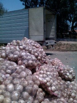 5,000 bricks of marijuana were hidden inside a trailer behind bags of onions.