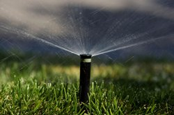A sprinkler waters a California lawn.