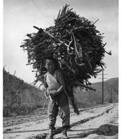 "A young boy carrying a large bundle of wood.  Caption written by William Orcutt, ""Even the kids work hard in Korea! May, 1952 (note Signal Corps work in background.)"""