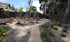 Xeriscape uses drought-tolerant and native plants which require much less water than lawns. Grass once dominated most of the 1500 square foot backyard instead of the drought-tolerant plants, flowers and pathways filling the space.
