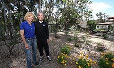 High water bills last summer convinced Scripps Ranch homeowners Meg Kaufman and Norm Bornstein to pull out their lawn.