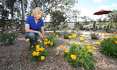 It only took a few water bills last summer to change the attitudes of Scripps Ranch homeowners Meg Kaufman and Norm Bornstein. They pulled out their lawn and replaced it with water conservation landscaping.