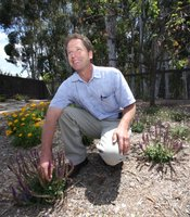 Steve Jacobs is the president and  project manager for Nature Designs Landscaping in Vista. Jacobs says Xeriscape can be green and full of beautiful plants.