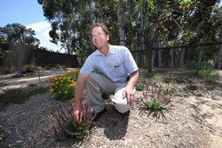 Steve Jacobs is the president and  project manager for Nature Designs Landsca...