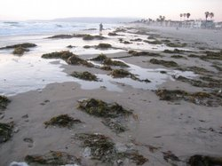 Some San Diego County beaches fared better than others in a national report on 2008 ocean water quality.