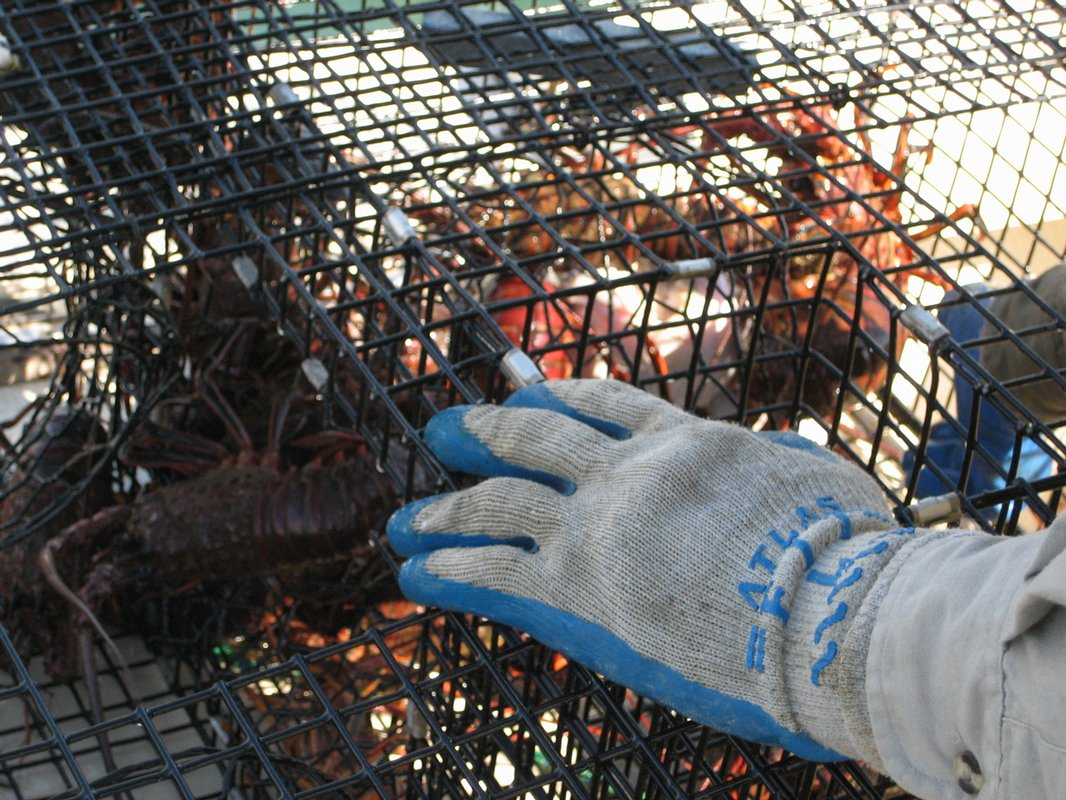 Are you getting the fish you bought? Seafood study targets ...