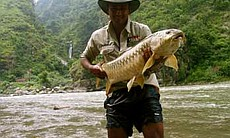 Fish photo, Amazon