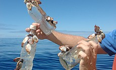 Specimens collected by the SEAPLEX expedition. Garbage is being studied for its effects on marine life.