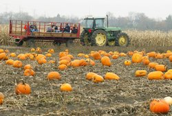 Families enjoy a hay-ride through a pumpkin patch leading up to Halloween.