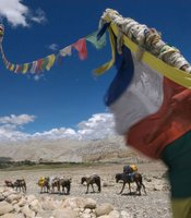 Horse caravan transports expedition loads in Upper Mustang.