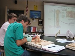 La Jolla High School students take part in a dissection lab activity during p...