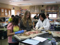 Science teacher Shauna Brammer helps hers students during a dissection lab ac...