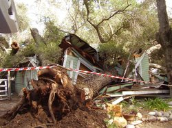 An unstable oak tree fell and crushed an unoccupied house in near Ramona on February 7, 2010.