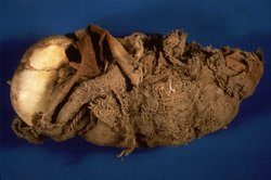 Above: 550-year-old mummy of an infant found in a cave in Peru