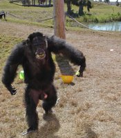 Ron on the island at the Save the Chimps sanctuary in Ft. Pierce, Florida.