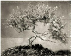 """Charles Grogg's """"Bonsai"""" from the series """"Reconstructions"""""""