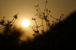 The sun sets behind dry native vegetation in Little Tujunga Canyon in the San...