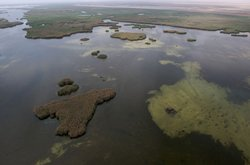 Aerial view of Iraqi marshes. Once the richest wildlife habitat in the Middle...