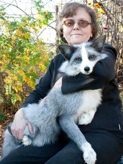 Dr. Lyudmila Trut with a domesticated silver fox in Siberia.
