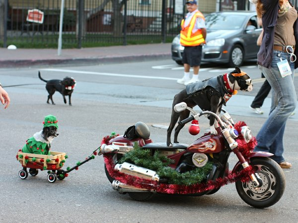 Flickr member Hapatxn took this hilarious photo at the Holiday Pet Parade in the Gaslamp.