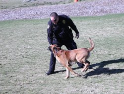Officer Mike McLeod and Monty go through some exercises to show that Monty has recovered after being shot, January 20, 2011.