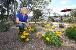 Homeowner Meg Kaufman replaced her lawn with new, water-conserving landscape.