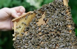 Groups are calling on the Environmental Protection Agency to stop the use of pesticides that are killing bees.