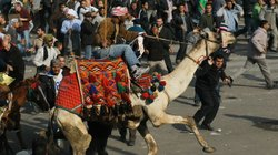 A supporter of embattled Egyptian president Hosni Mubarak rides a camel through the melee during a clash between pro- and anti-Mubarak protesters February 2, 2011 in Tahrir Square in Cairo, Egypt.