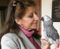 Irene Pepperberg poses with a new study subject named Griffin, the parrot. An unlikely scientific team, Pepperberg and her talking parrot, Alex, revolutionized scientists' ideas about animal communication.