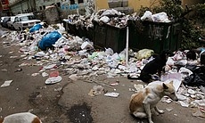 Dogs mill about near unemptied trash bins on a downtown street Feburary 10, 2011 in Cairo, Egypt. Despite an attempt to return to normal, many essential services have been diminished or put on hold in the Egyptian capital, as an anti-government protest movement has shook the Egyptian nation.