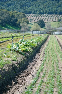 Tierra Miguel Farm in Pauma Valley is one of many local farms that provides l...