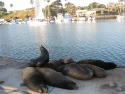 Sea lions lounging on the dock at Oceanside harbor, April 7th 2011
