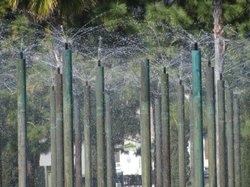 A local fountain sprays water into the air during a sunny day in San Diego.