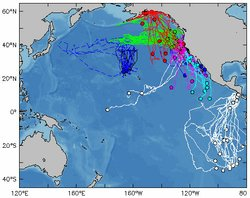 The map pictured here shows the interweaving tracks of several pelagic (open-...