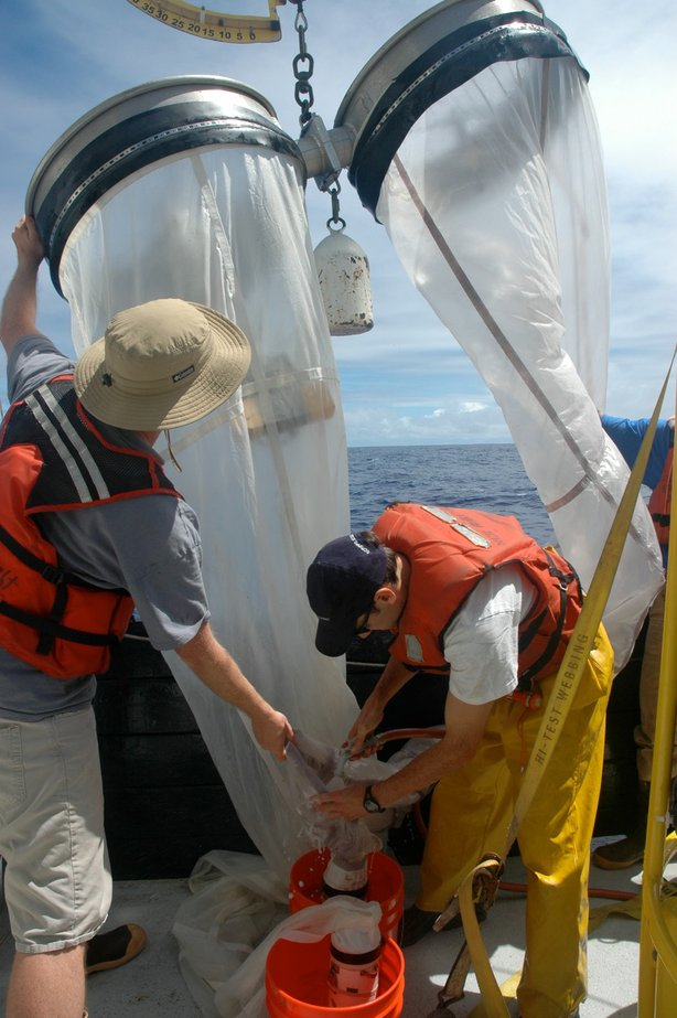 Two researchers on the expedition took samples from a net that contained fish, plastic and other small pieces of rubbish.