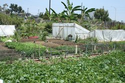 The New Roots Community Farm allows people in the neighborhood to grow food f...