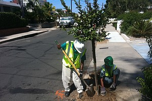 San Diego Kicks Off Program To Plant 500 Trees Around The City